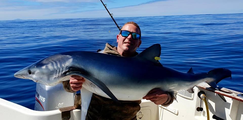 Blauhai – beinahe angekommen… #CPRsavesfish