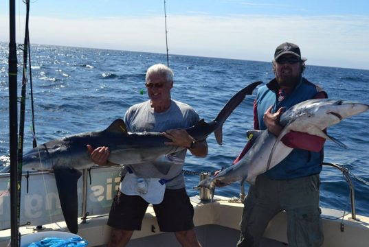 Doppelfang – zwei Blauhaie, marliert und bereit zum Zurücksetzen